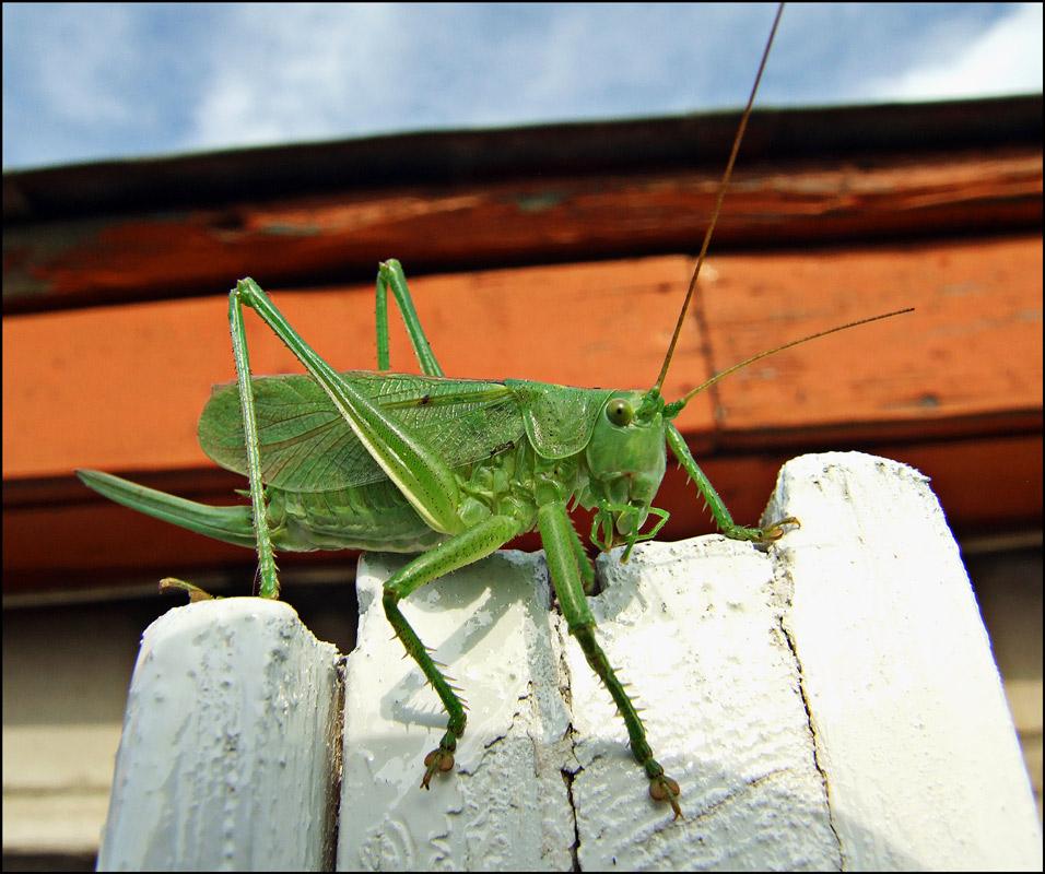 """фото """"Модель N2.Прощальный снимок."""" метки: природа, насекомое"""