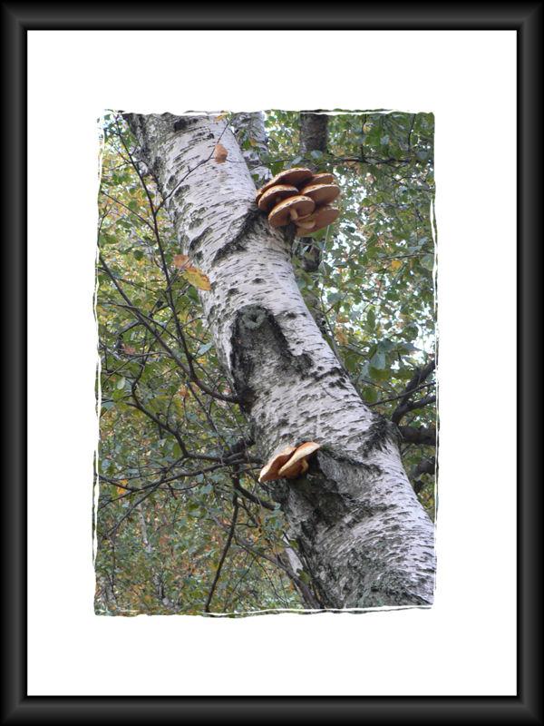 "фото ""Соседи"" метки: природа, цветы"