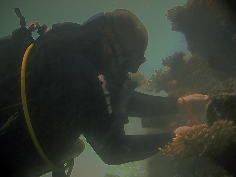 """фото """"Пощупать Большой Барьерный Риф..."""" метки: путешествия, Австралия"""