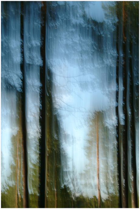 """photo """"FOREST ABSTRACTION"""" tags: nature, abstract,"""