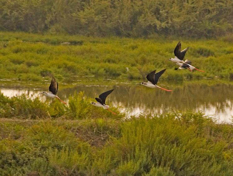 "photo ""Longleg Birds"" tags: nature, wild animals"