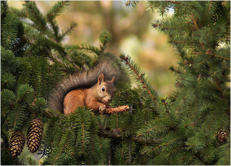 """фото """"С наступающей зимой!"""" метки: природа, дикие животные"""