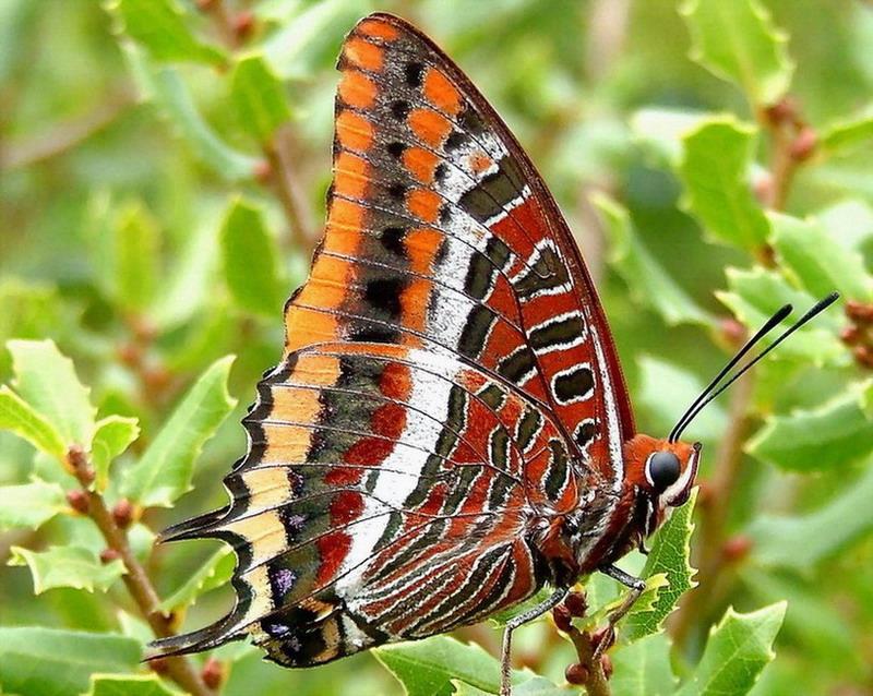 """фото """"Butterfly"""" метки: природа, макро и крупный план, насекомое"""