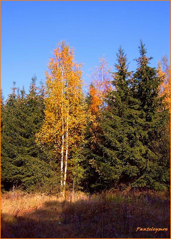 """фото """"красавица осень"""" метки: пейзаж, осень"""