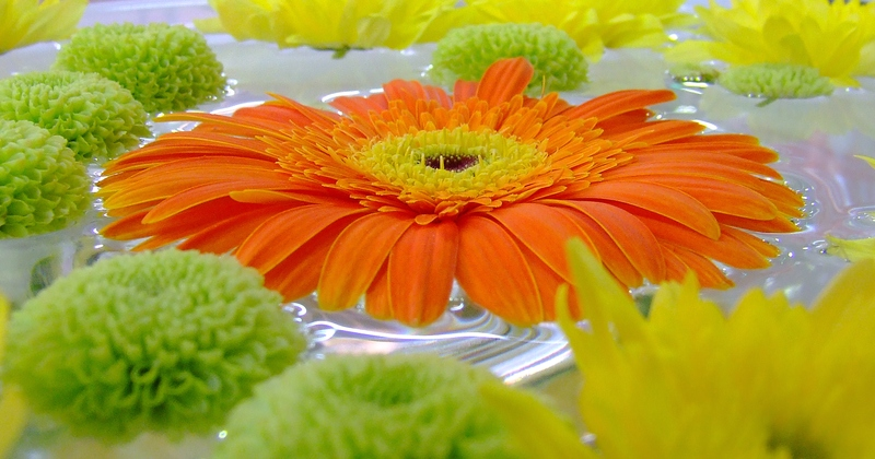 """фото """"И снова осень"""" метки: природа, макро и крупный план, цветы"""