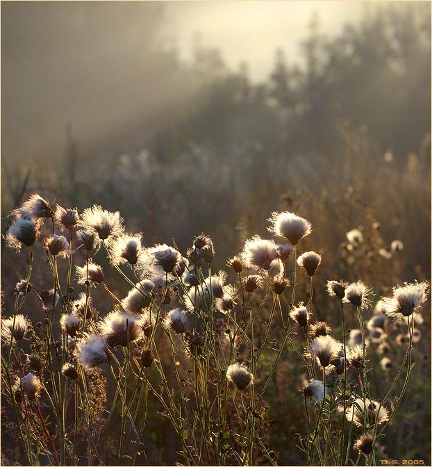 "photo ""Autumn etude"" tags: landscape,"