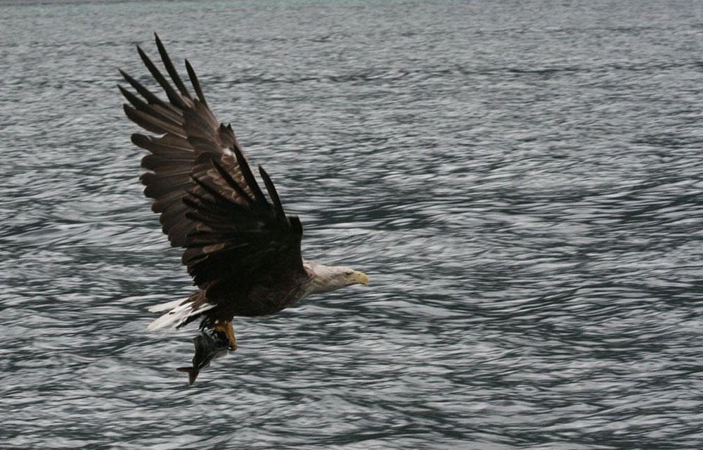 """фото """"Eagle 1"""" метки: природа,"""