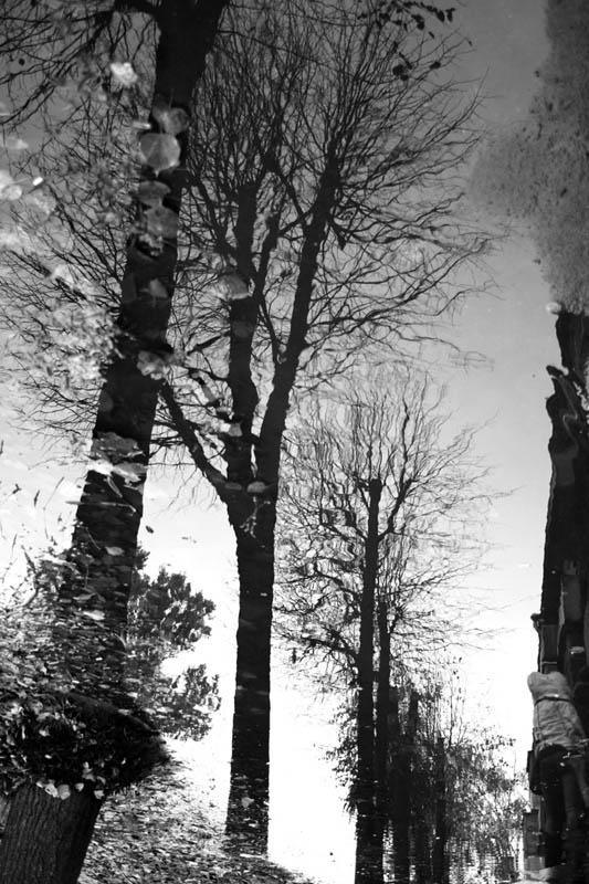 "фото ""дерево"" метки: черно-белые,"