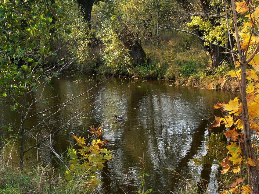 "фото ""Фрагмент осени."" метки: пейзаж, природа, осень"