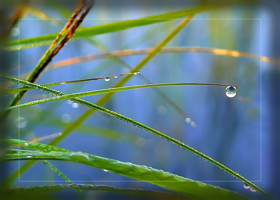 """photo """"And the world in a drop"""" tags: macro and close-up, nature,"""