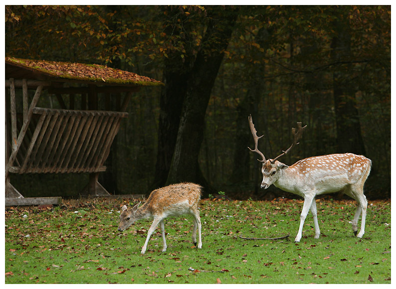 "photo ""***"" tags: landscape, nature, autumn, wild animals"