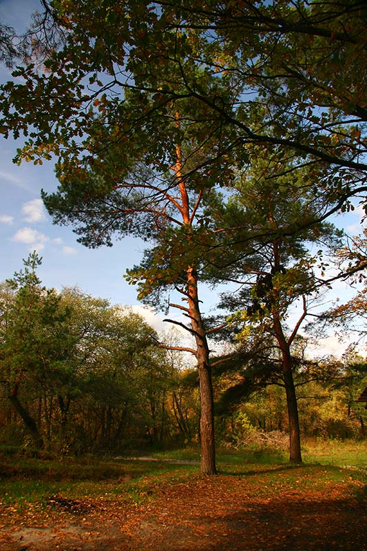 """фото """"В осеннем лесу"""" метки: пейзаж, лес, осень"""