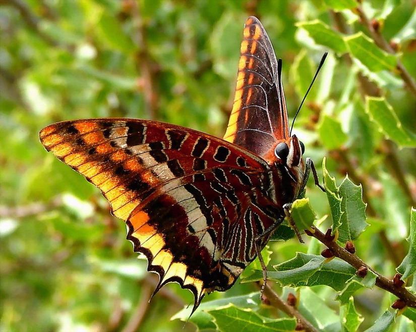 """фото """"Beautifull"""" метки: природа, макро и крупный план, насекомое"""