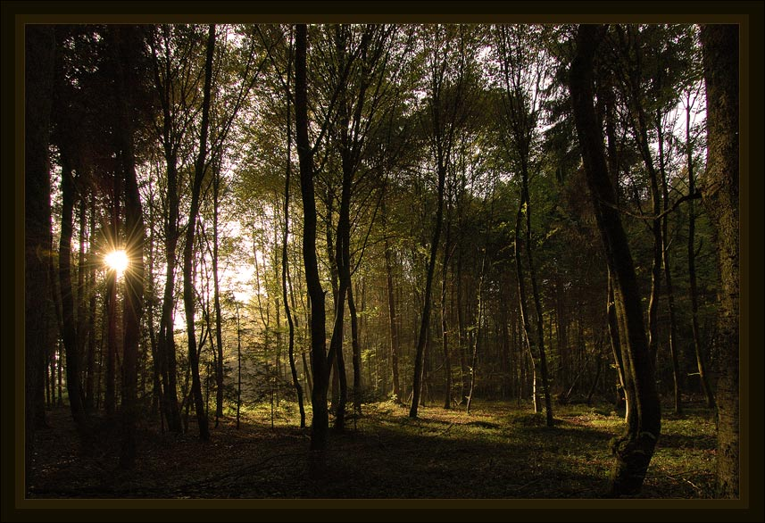 "photo ""***"" tags: landscape, autumn, forest"