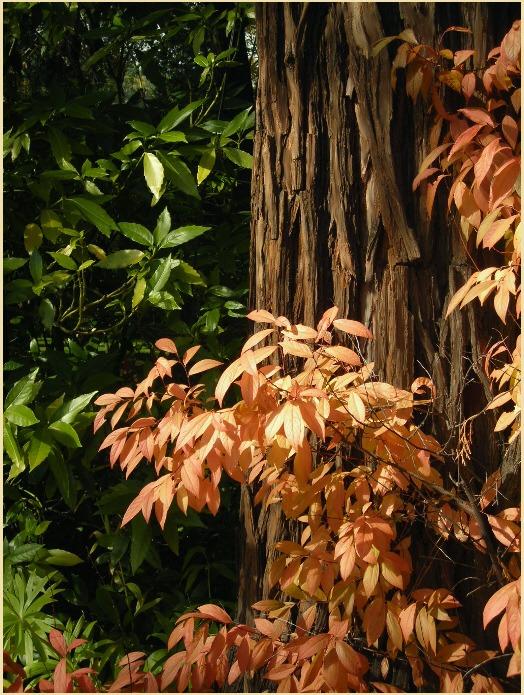 """фото """"***"""" метки: пейзаж, осень"""