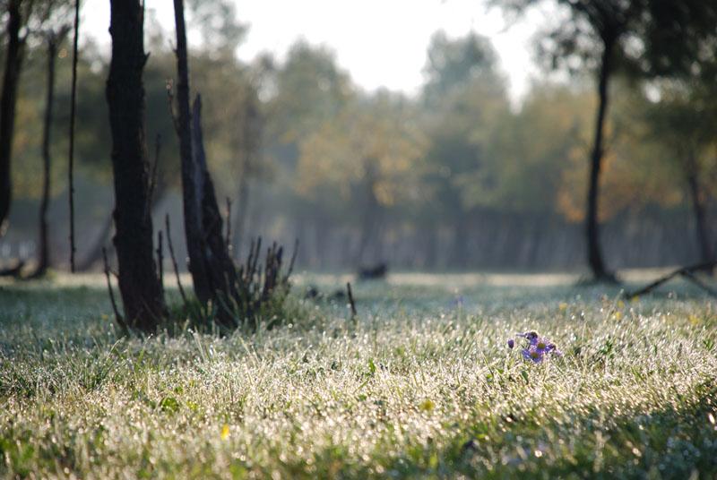 """фото """"утренний взгляд"""" метки: пейзаж,"""