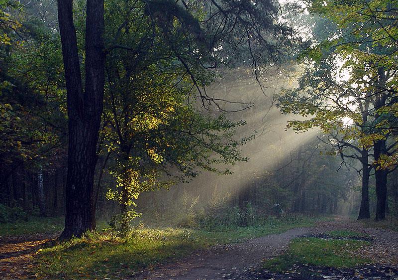 """фото """"Осенняя аллея."""" метки: пейзаж, лес, осень"""