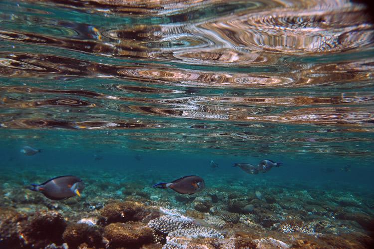 "photo ""RED SEA REEF"" tags: underwater,"