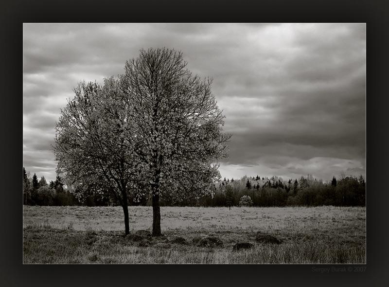 """фото """"2 (IR)"""" метки: пейзаж, черно-белые,"""