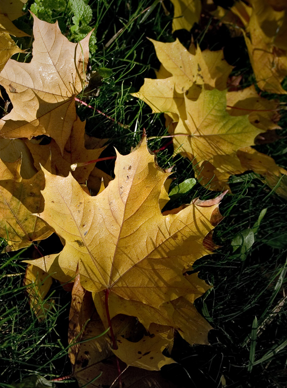 "photo ""Autumn under legs"" tags: nature,"
