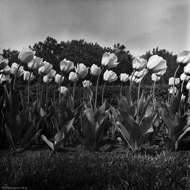 "photo ""////"" tags: black&white,"