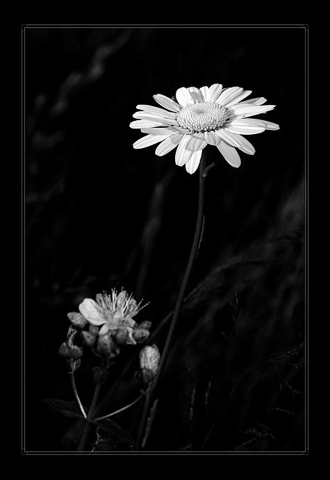 "photo ""***"" tags: black&white,"
