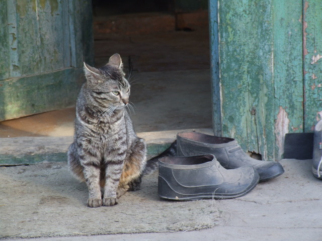 """фото """"Хозяин"""" метки: природа, домашние животные"""