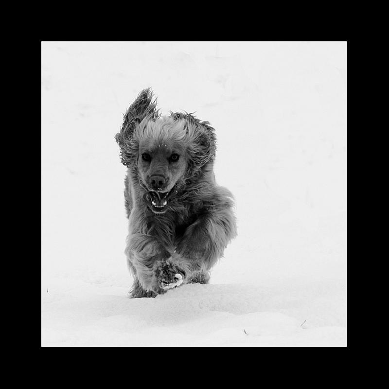 "photo ""beast..."" tags: nature, pets/farm animals"