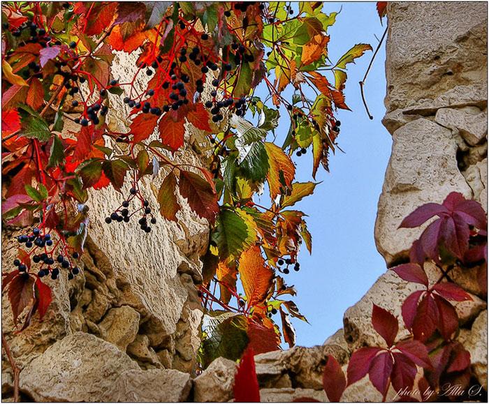 """фото """"Разрисует осень листья..."""" метки: пейзаж, фрагмент, осень"""