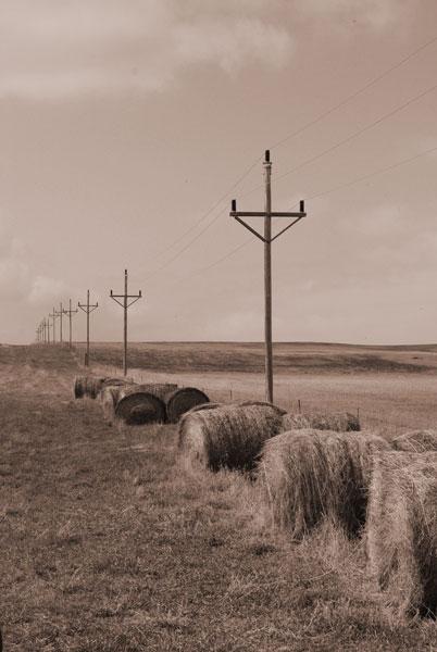 """photo """"Bales & Poles"""" tags: landscape, autumn"""