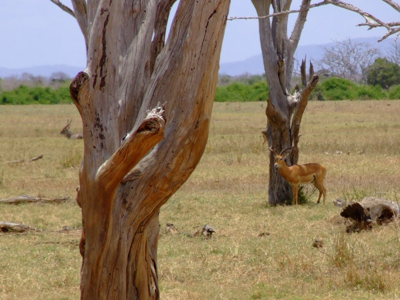 "photo ""Kenya"" tags: landscape, nature, wild animals"