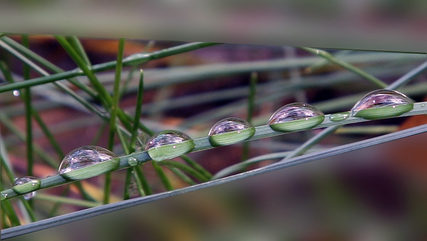 "photo ""The team from droplets"" tags: nature, macro and close-up,"