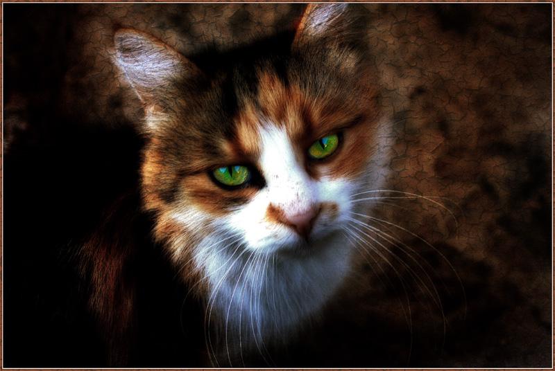 """фото """"Мой ласковый и нежный зверь"""" метки: природа, портрет, домашние животные"""