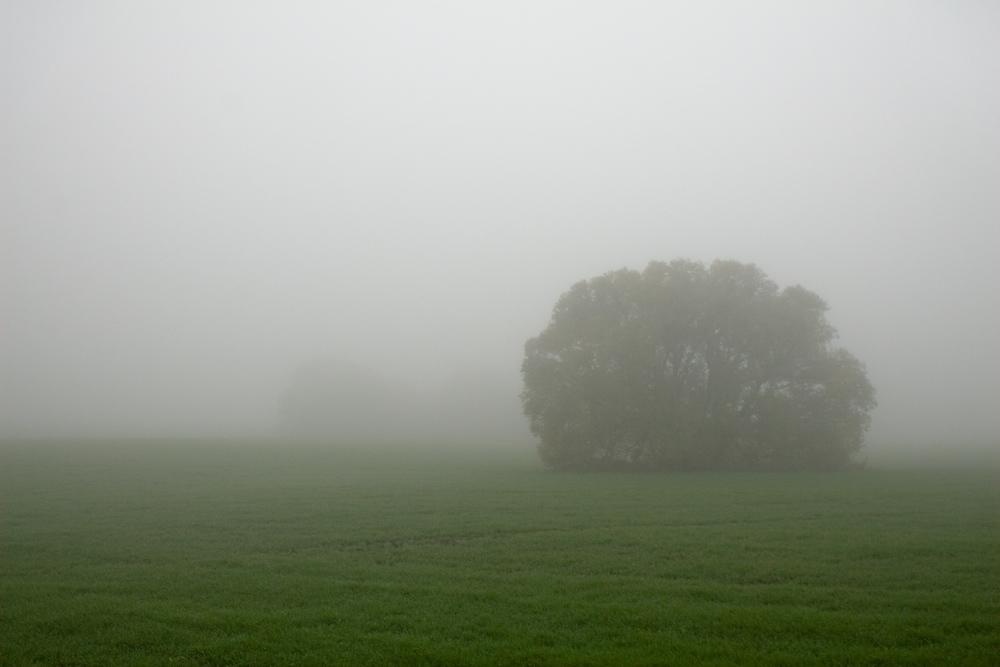 "фото ""В тумане."" метки: пейзаж,"