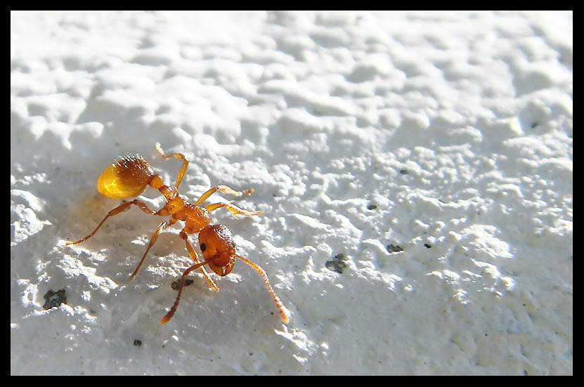 "photo ""The ant_2"" tags: macro and close-up, nature, insect"