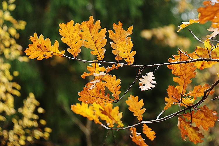 """фото """"Листопадная осень"""" метки: пейзаж, природа, осень, цветы"""