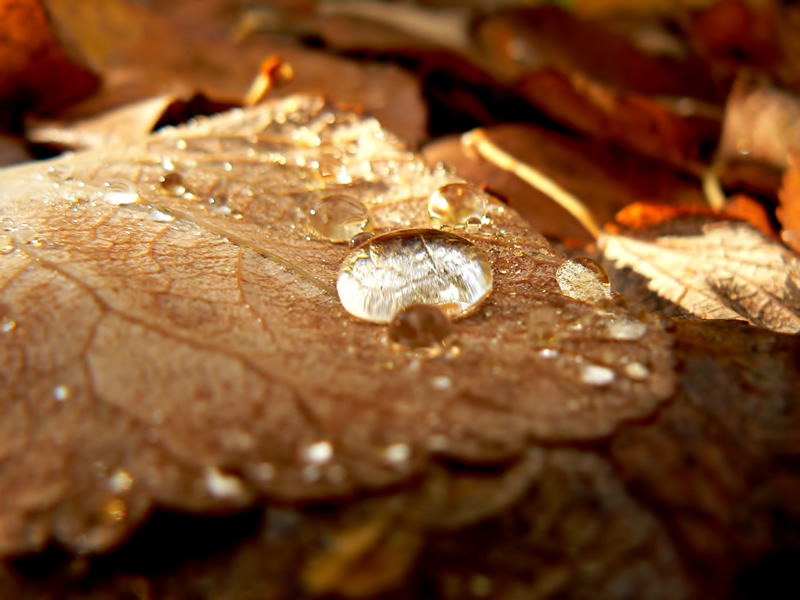 "photo ""Rain on Autumn Leaves"" tags: macro and close-up, nature, flowers"