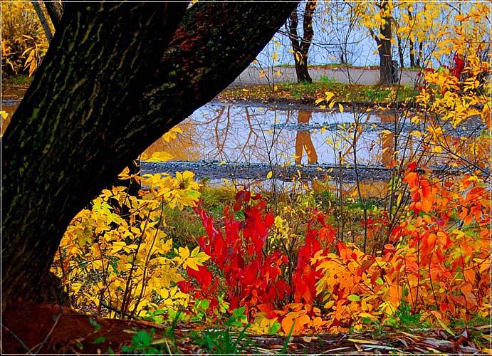 """фото """"Дни поздней осени бранят обыкновенно..."""" метки: пейзаж, осень"""