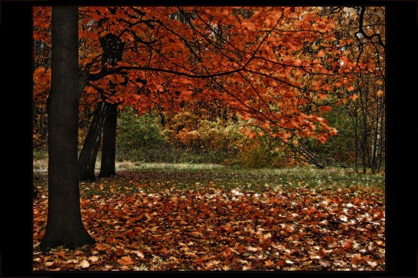 """фото """"Осенняя."""" метки: пейзаж, лес, осень"""