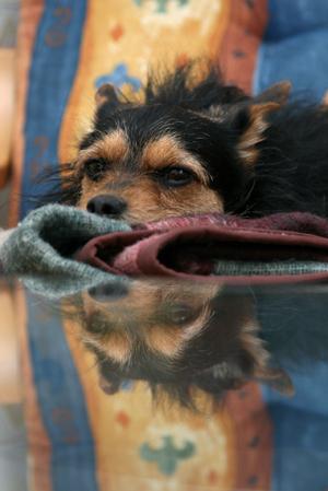 "photo ""Thinking dog"" tags: nature, pets/farm animals"