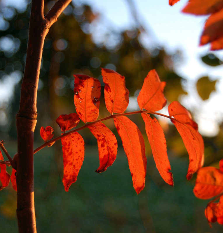"фото ""Red"" метки: природа, цветы"