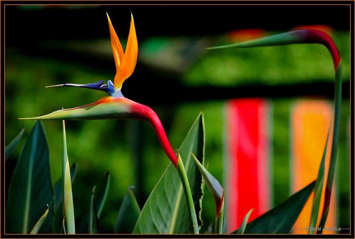"""фото """"full colors"""" метки: природа, макро и крупный план, цветы"""