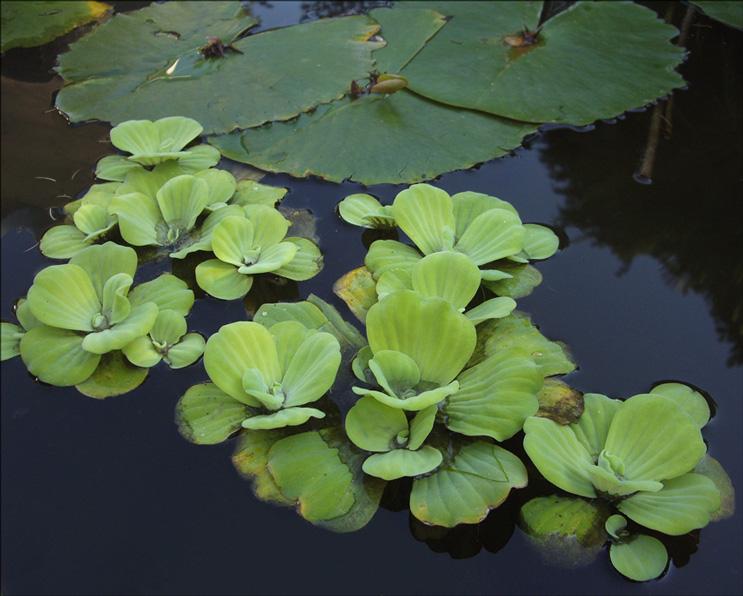 """фото """"С кувшинкой рядом..."""" метки: природа, цветы"""