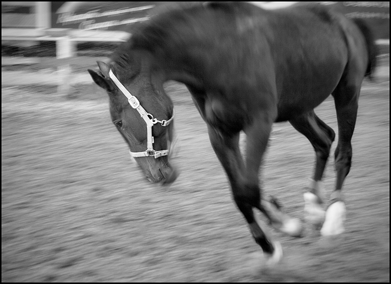 "photo ""Aspiration to freedom"" tags: nature, black&white, pets/farm animals"