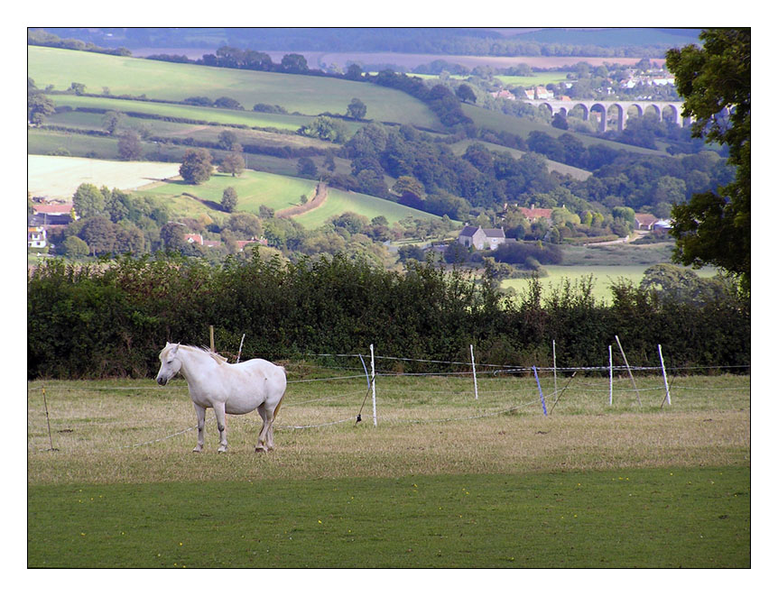 "photo ""Fairy tale about a sad white  horse."" tags: nature, genre, pets/farm animals"