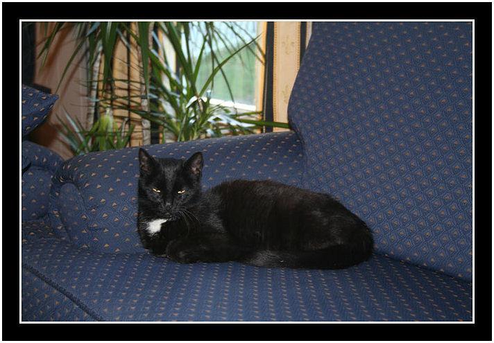 "фото ""Lost Cat"" метки: природа, дикие животные"