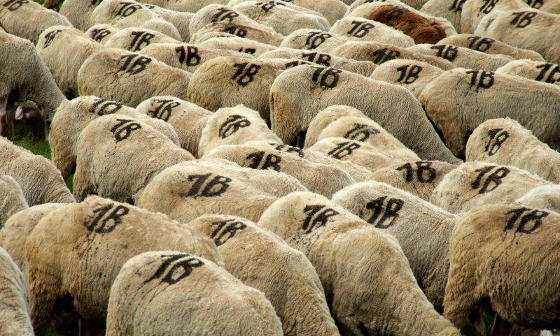 "photo ""Class I-b"" tags: nature, pets/farm animals"
