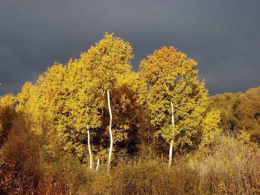 "photo ""Golden Autumn"" tags: landscape, autumn"