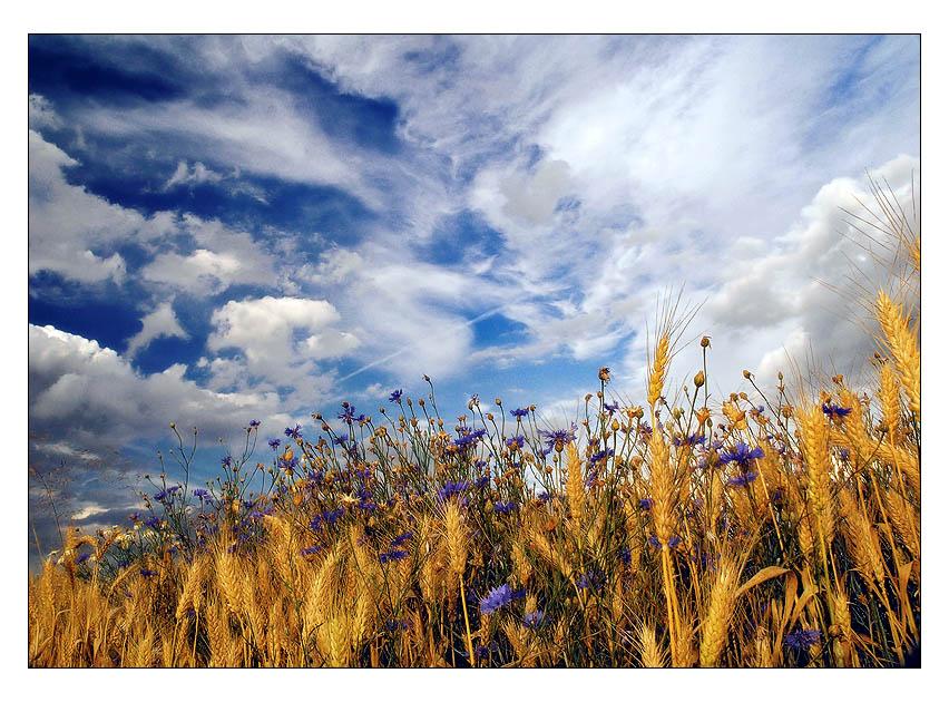 "photo ""Summer memories"" tags: landscape, summer"
