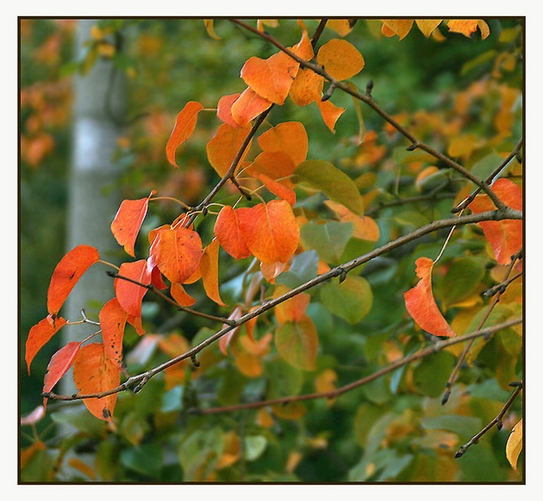 "photo ""Ther are the colors still"" tags: landscape, nature, autumn, flowers"